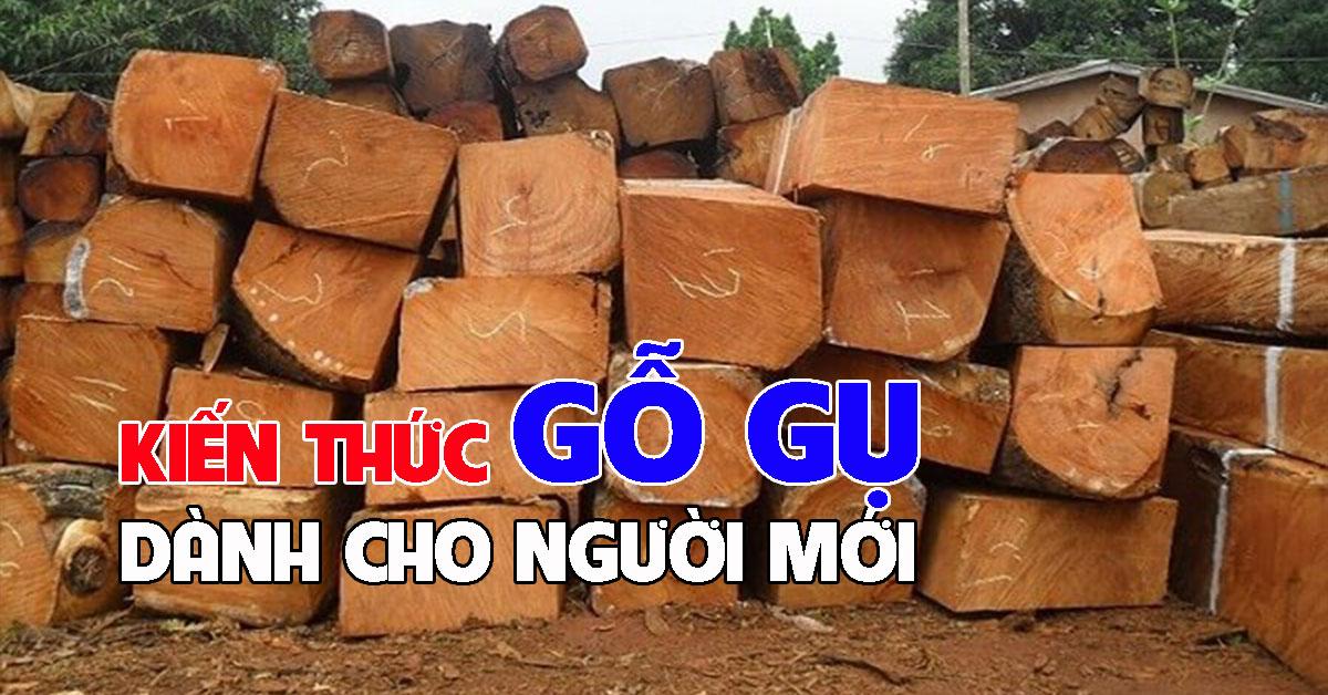 Kiến thức về gỗ gụ dành cho người mới