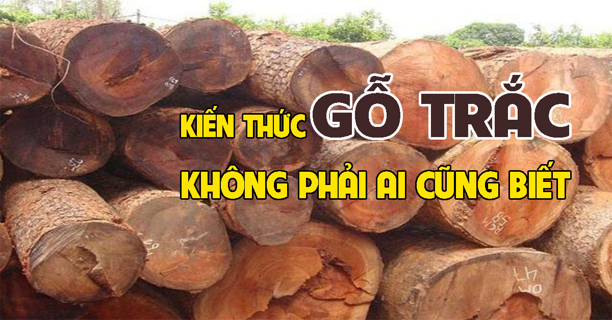Kiến thức về gỗ trắc không phải ai cũng biết